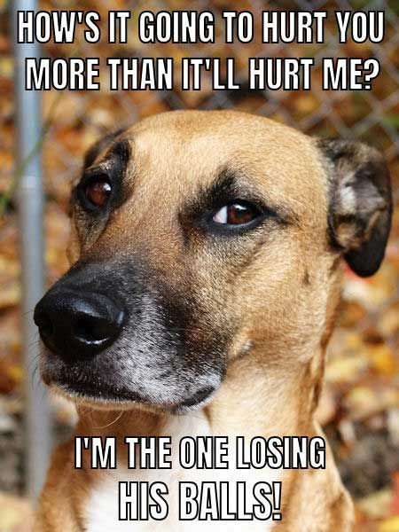 Over 65 Unforgettable Dog Memes Hilarious Pictures Unleashed Dog Memes Cute Dog Memes Funny Dog Memes