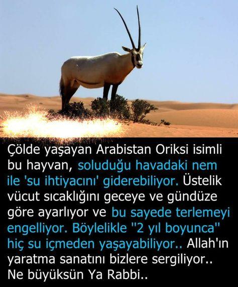 Insanların Bilmediği Ilginç Bilgiler Bilgi Ansiklopedisi Allah