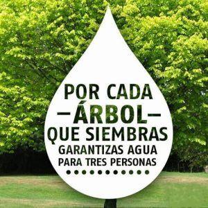 Frases Del Cuidado De La Naturaleza Para Carteles Cuidado De La Naturaleza Medio Ambiente Frases Medio Ambiente