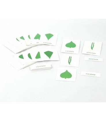 Tarjetas Botanica En Tres Partes Ingles Tarjetas De Botanica En Tres Tiempos Para El Gabinete De Botanica De 1 Tarjetas Tarjetas Con Nombres Nombres En Ingles