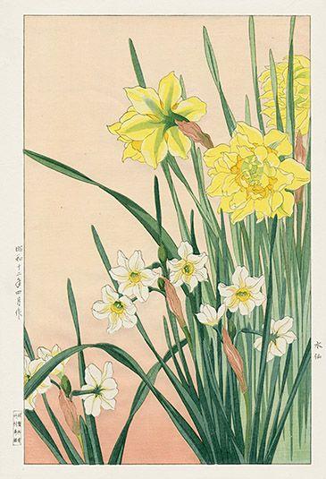 Shodo Kawarazaki Spring Flower Woodblock Prints Botanical Drawings Japanese Woodblock Printing Daffodils