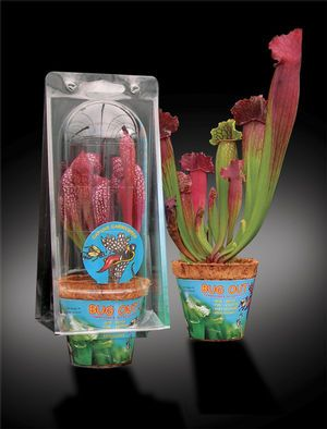 Bugout   Assorted Carnivores In Captivity   Bug Out From Aquascapes  Unlimited | Me | Pinterest