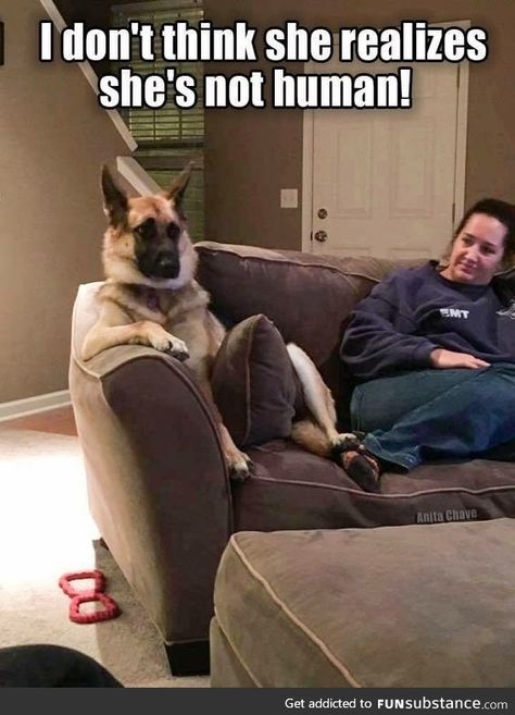 Wow we bet she dont realizes shes not human, funny dogs, cute dogs. You can create awesom funny dog memes out of them. Funny Animal Jokes, Funny Dog Memes, Really Funny Memes, Cute Funny Animals, Funny Animal Pictures, Animal Memes, Cute Baby Animals, Funny Cute, Funny Dogs