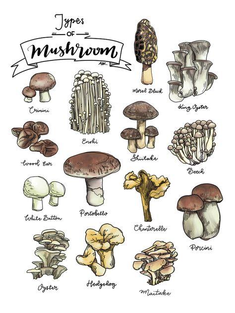 Types of Mushroom Framed Art Print