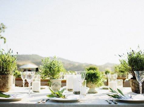 Potted herbs as centerpieces.