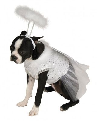 Angel Costume For Dogs Pet Costumes Pet Halloween Costumes Dog