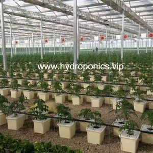Agriculture Hydroponic Hydroponics Grow Planting