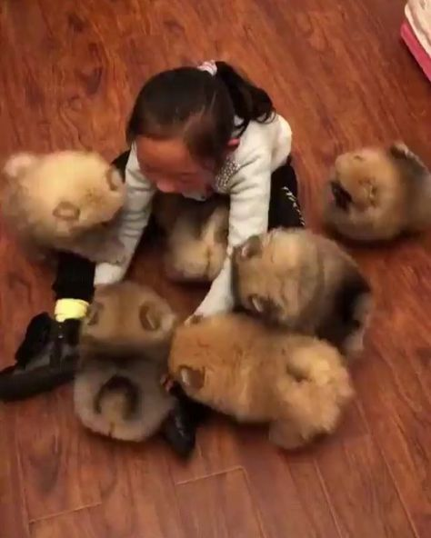 Look At Them Cute Aww Dogs Dog Puppies Puppy