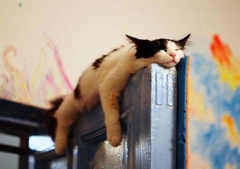 Gato Dormilon Gato Durmiendo Gatitos Adorables Loca De Los Gatos