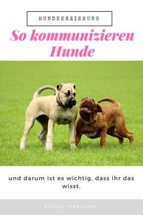 Wie Kommunizieren Hunde Midoggy Community Gesunde Hunde Hunde Welpen