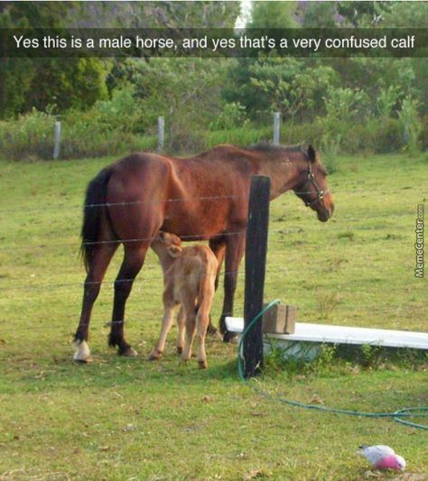The Horse Looks Like He's Enjoying It
