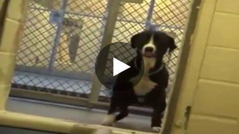 Die Reaktion Dieses Hundes Als Er Begreift Dass Er Nun Adoptiert Wurde Ist Herzbewegend Hunde Tierheim Tiere