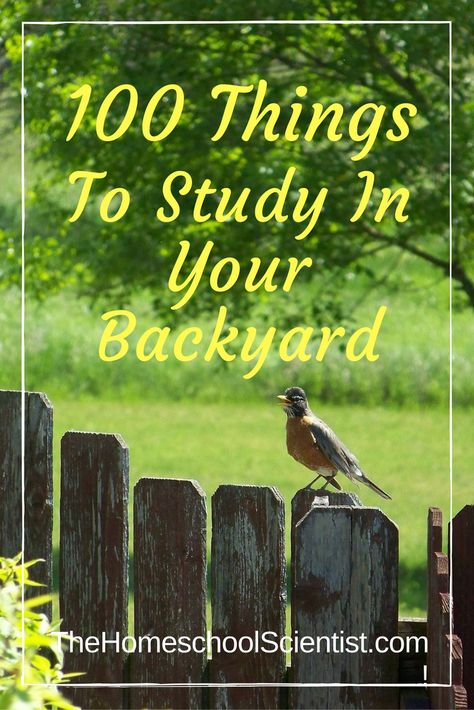 Top Ten Everyday Living Insurance Plan Misconceptions 100 Things To Study In Your Backyard - The Homeschool Scientist Nature Activities, Science Activities, Outdoor Activities, Kid Science, Science Ideas, Science Websites, Outdoor Education, Outdoor Learning, Environmental Education