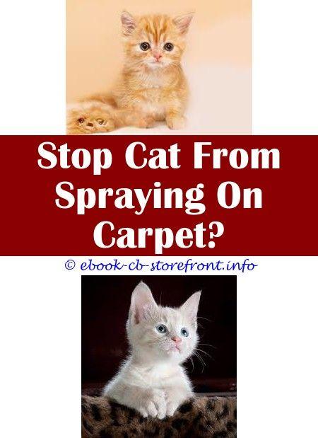 Flea Carpet Spray Australia