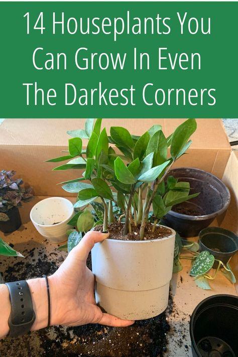 Garden Yard Ideas, Garden Projects, Garden Bar, Garden Pond, Dream Garden, Herb Garden, Potted Plants, Garden Plants, House Plants Decor