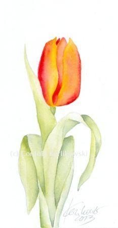Tulpe 12 X 24 Cm Aquarell C Cordula Kerlikowski Floral