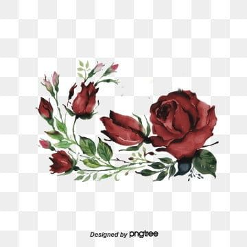 Dark Red Burgundy Flower Cluster Lace Originality Burgundy Hand Drawn Png Transparent Clipart Image And Psd File For Free Download Floral Wreath Watercolor Dark Red Roses Red Roses Wallpaper
