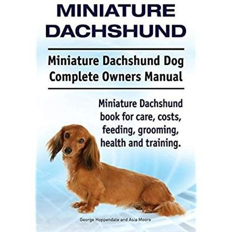 Miniature Dachshund Miniature Dachshund Dog Complete Owners