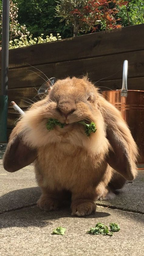 I dont think well ever get another picture of Pumpkin that is this funny : Rabbits