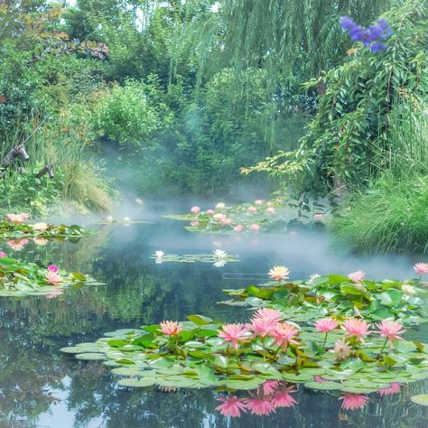 Beautiful World, Beautiful Places, Beautiful Scenery, Nature Aesthetic, Aesthetic Plants, Lily Pond, Aesthetic Pictures, Pretty Pictures, Aesthetic Wallpapers
