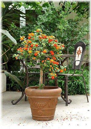 Mein Schoner Garten Hibiscus 4er Set Summer Nights Gunstig Online Kaufen Mein Schoner Garten Shop In 2020 Wandelroschen Pflanzen Kubelpflanzen