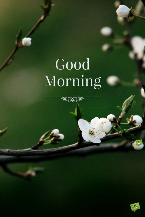 Good Morning. Start your day with positive energy and happy thoughts!