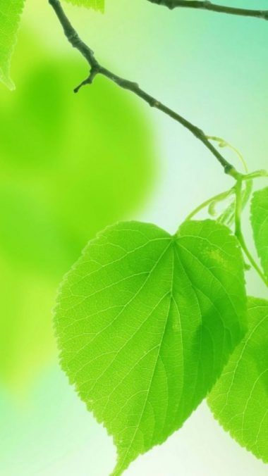Pin By Setaswall On Phone Wallpapers Green Leaf Wallpaper Samsung Wallpaper Leaf Wallpaper