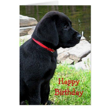 Little Red Collar Black Lab Puppy Labrador Card Zazzle Com Black Labrador Puppy Black Labrador Labrador Puppy