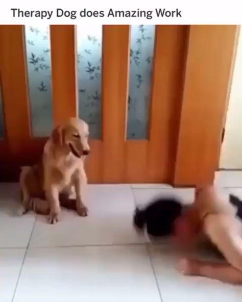 Dog Memes Of The Day 32 Pics #dogs #doglovers #puppy #puppies #animals #animallovers #lovelyanimalsworl#lovelyanimalsworld