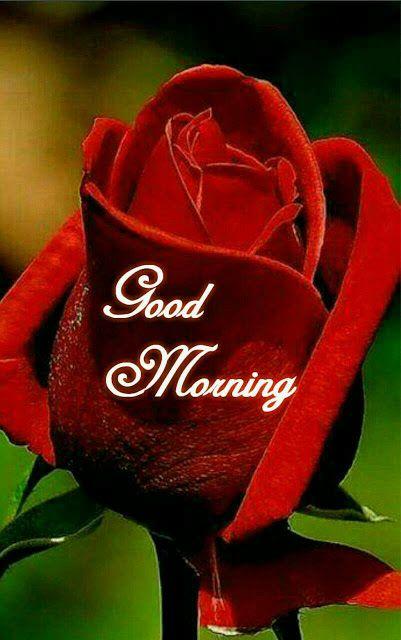 Good Morning Pictures 2018 In Hindi Punjabi English Whatsapp Images Good Morning Roses Good Morning Images Flowers Morning Pictures