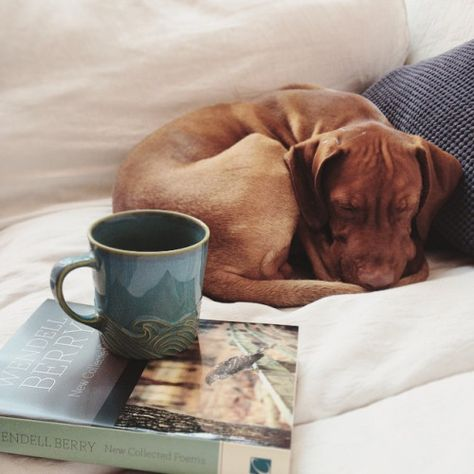 The perfect morning... ☕️