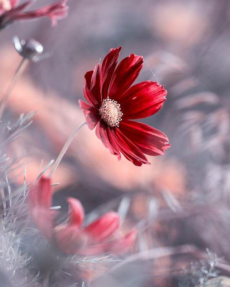 #flowerstagram: Wonderful Flower Photography by Fabien Bravin #photography #flowerstagram #flowers #instaflowers #flowersgram