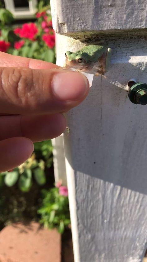 Frogy   - huguette viale -  -  Frogy    Froggy in hot temp
