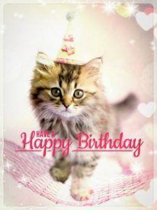Happy Birthday Cat Meme Hd Herzliche Geburtstagsgrusse