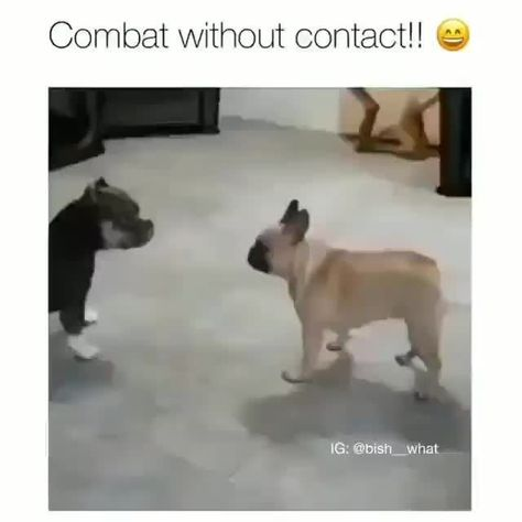"""Combat without contact"""" e» – popular memes on the site iFunny.co"""
