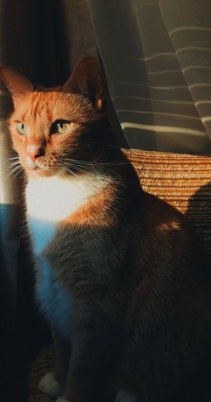 handsome boi #cat #mybaby #mobilephotography   ggenesis-s   VSCO