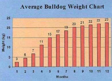 Weight Chart Bulldog Weight Charts Bulldog Chart