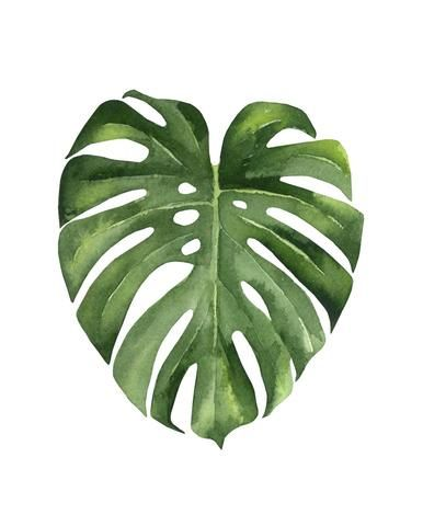 Monstera Ii In 2020 Plant Art Plant Painting Watercolor Plants