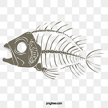 Fish Bones Fish Fish Bone Png Transparent Clipart Image And Psd File For Free Download Fish Silhouette Fish Background Fish Logo