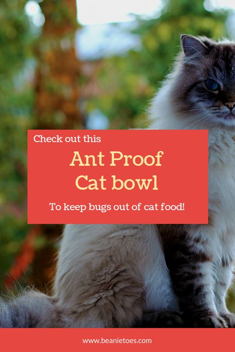 Try This Ant Proof Cat Bowl To Keep Pests Out Of Your Pet Dishes