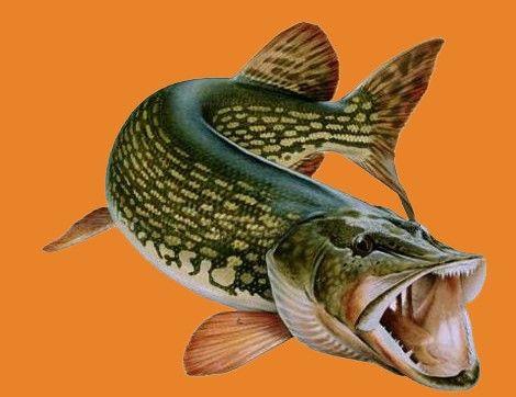 Активатор клёва FishHungry официальный сайт http://ellemarket.com ...