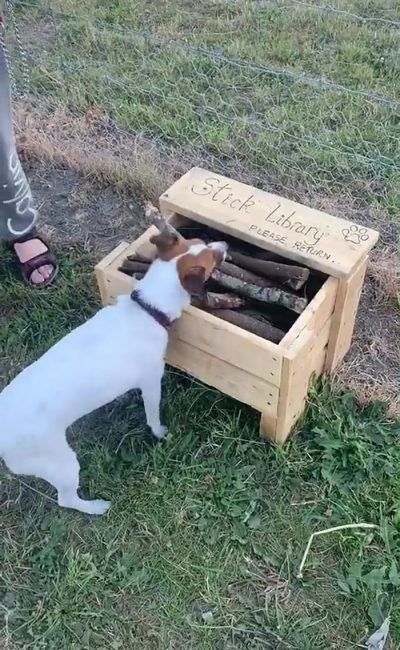 Man Builds A Stick Library For Every Dog At The Park Dog Park