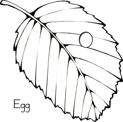 Butterfly Egg Coloring Page Coloring Eggs Egg Coloring Page