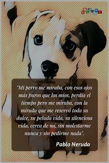 92 Ideas De Mis Perros Perros Perros Frases Amor De Perro