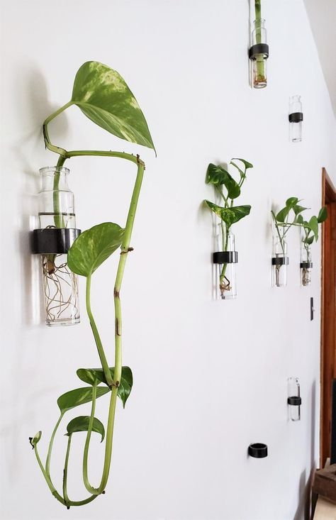 Hanging Vase Wall Vase Glass Hanging Vase Wall Hanging Vase Wall Mount Vase Propagation Vase Plant Wall Decor Living Wall Rooting In 2020 Hanging Vases Plant Wall Decor Indoor Plant Wall