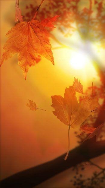 Nature Autumn Sunset Free Fall Iphone Fall Wallpaper Iphone 5s Wallpaper Yellow Wallpaper
