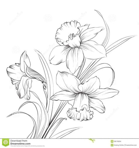 lilies flowers to color Lily Flower Coloring Pages - Flower - best of coloring pages watering plants