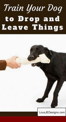 Maltese Dog Training Tips And Pics Of How To Train Your Dog To