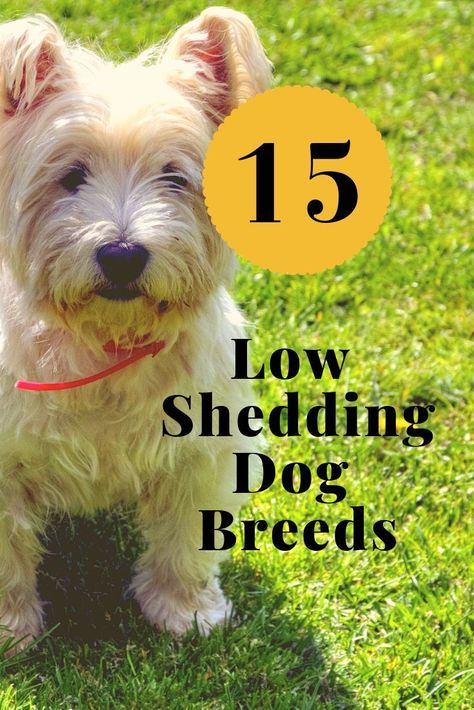 15 Low Shedding Dog Breeds Hypoallergenic Breeds Low Shedding