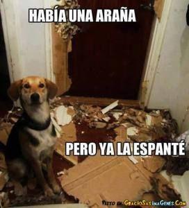 Memes Chistosos De Gatos Y Perros 7 Memes De Perros Chistosos Memes Perros Chistes De Perros